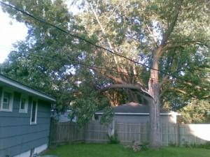 Bad tree!